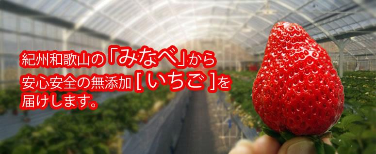 紀州和歌山のみなべから「いちご」をお届け
